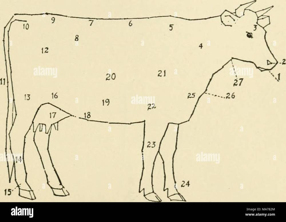 medium resolution of 121 diagram of a cow 1 muzzle 2