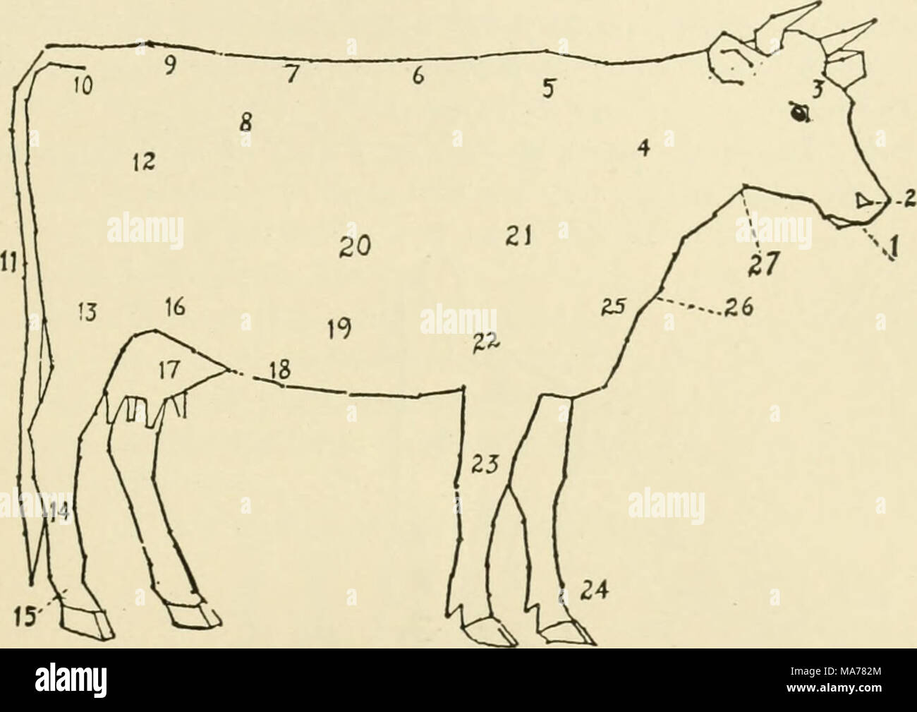 hight resolution of 121 diagram of a cow 1 muzzle 2