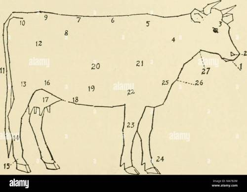 small resolution of 121 diagram of a cow 1 muzzle 2