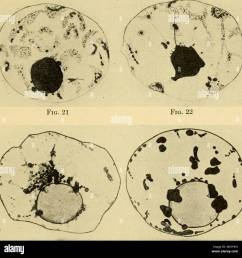 the eggs of mammals fig 23 fig 24 plate ii  [ 1300 x 1325 Pixel ]