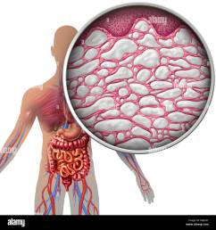 interstitium human body anatomy with organs concept as connective tissue with comparments filled with fluid as [ 1300 x 1376 Pixel ]
