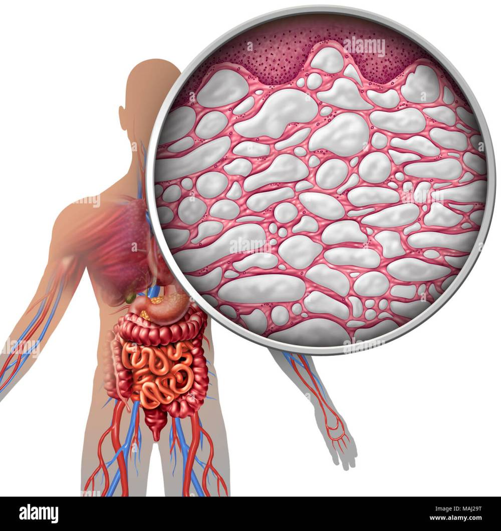 medium resolution of interstitium human body anatomy with organs concept as connective tissue with comparments filled with fluid as