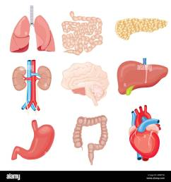 human internal organs isolated on white vector illustration set with heart intestines kidneys stomach [ 1295 x 1390 Pixel ]