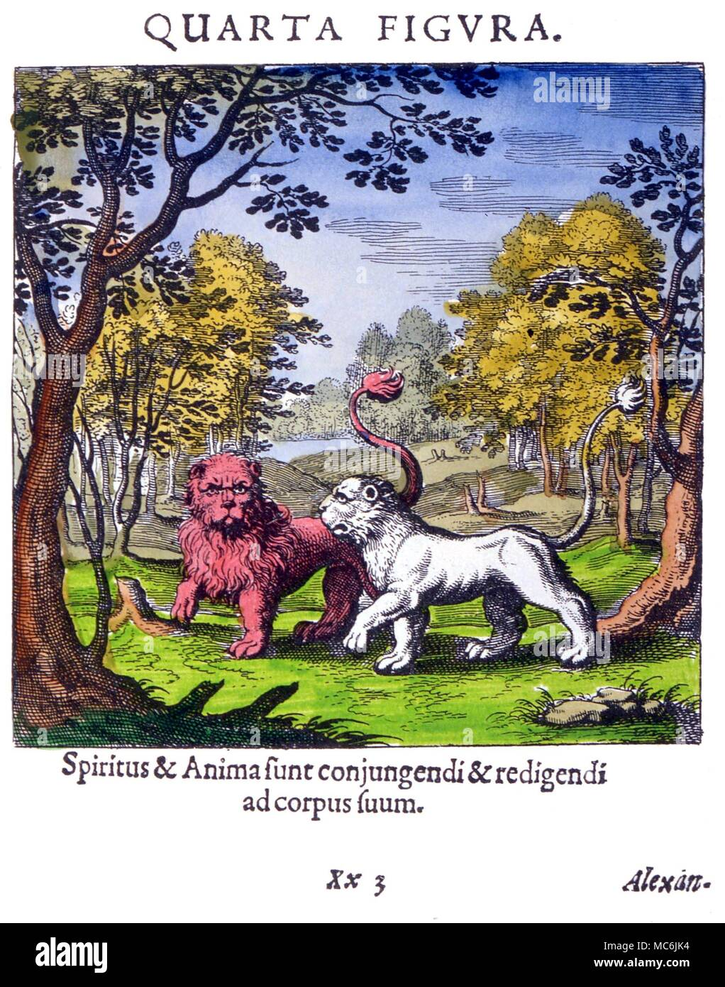 hight resolution of diagram plate iv from lambsprinck s de lapide philosophico frankfurt 1677 the lion and lioness symbolize the merging into a single body of spirit and