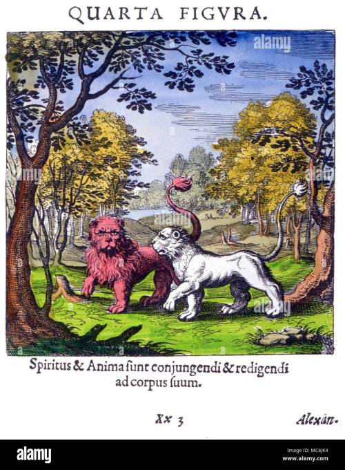 small resolution of diagram plate iv from lambsprinck s de lapide philosophico frankfurt 1677 the lion and lioness symbolize the merging into a single body of spirit and
