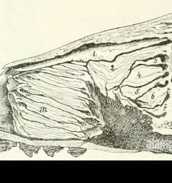 fig llv l ngsschnitt durch die nasenh hle von phoca nasoturbinale 2  [ 1300 x 731 Pixel ]