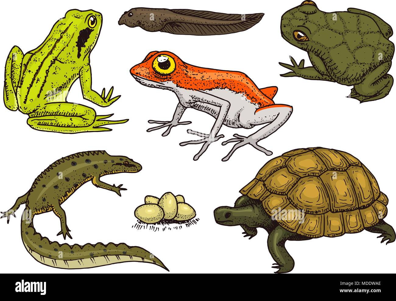 Reptiles And Amphibians Set Pet And Tropical Animals