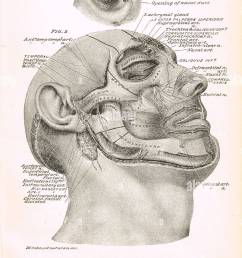 19th century facial cross section stock image [ 891 x 1390 Pixel ]