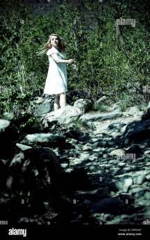 Walking Forest Dark Stock &