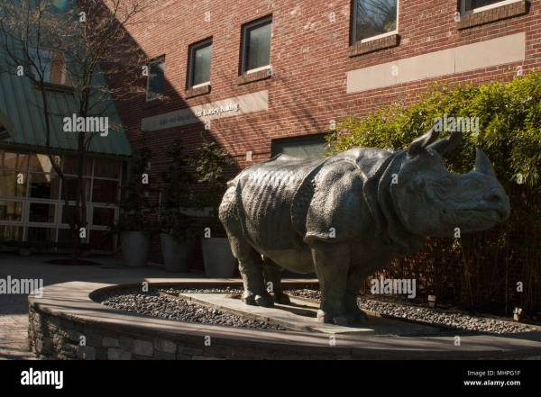 Rhino Museum Stock & - Alamy