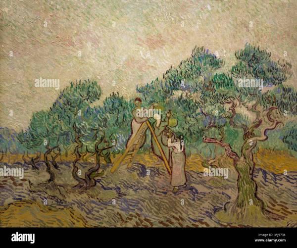 Gogh Olive Stock & - Alamy