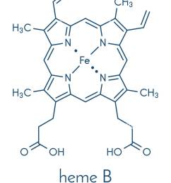 heme is an essential component of hemoglobin myoglobin cytochrome catalase and other metalloproteins skeletal formula  [ 1046 x 1390 Pixel ]