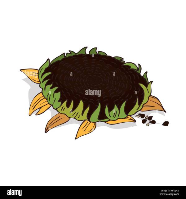 cartoon sunflower stock