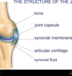illustration of the joint anatomy bone vector stock image [ 1300 x 1066 Pixel ]
