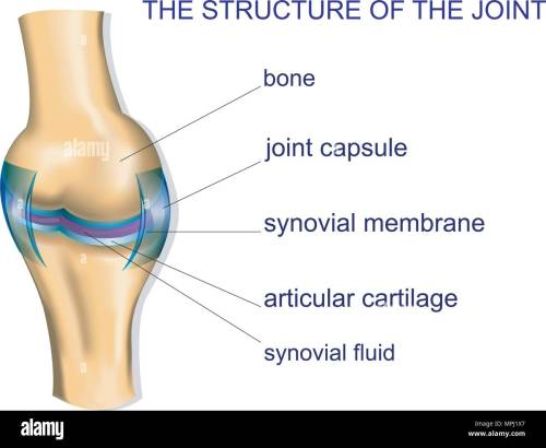 small resolution of illustration of the joint anatomy bone vector stock image