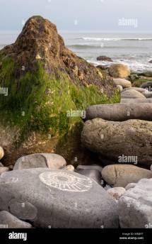 Lyme Regis Fossil Hunting Stock &