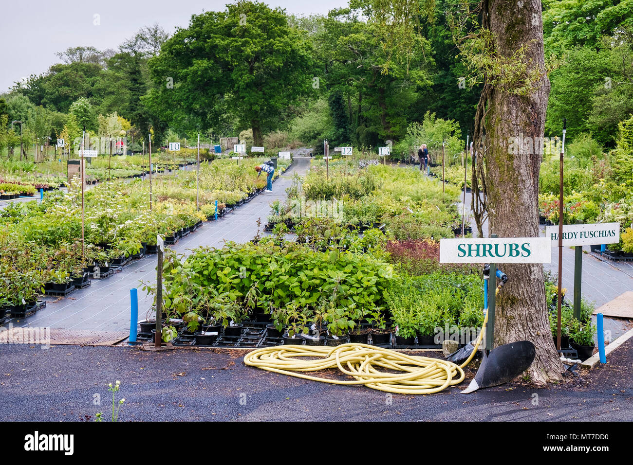 A Wide Selection Of Plants For Sale In A Large Garden Centre Nursery Stock Photo 187019644 Alamy
