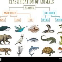 Bird Diagram Unlabeled Recessed Light Wiring Of Animals