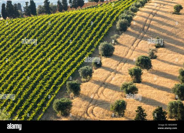 Panoramic view of olive groves vineyards and farms on