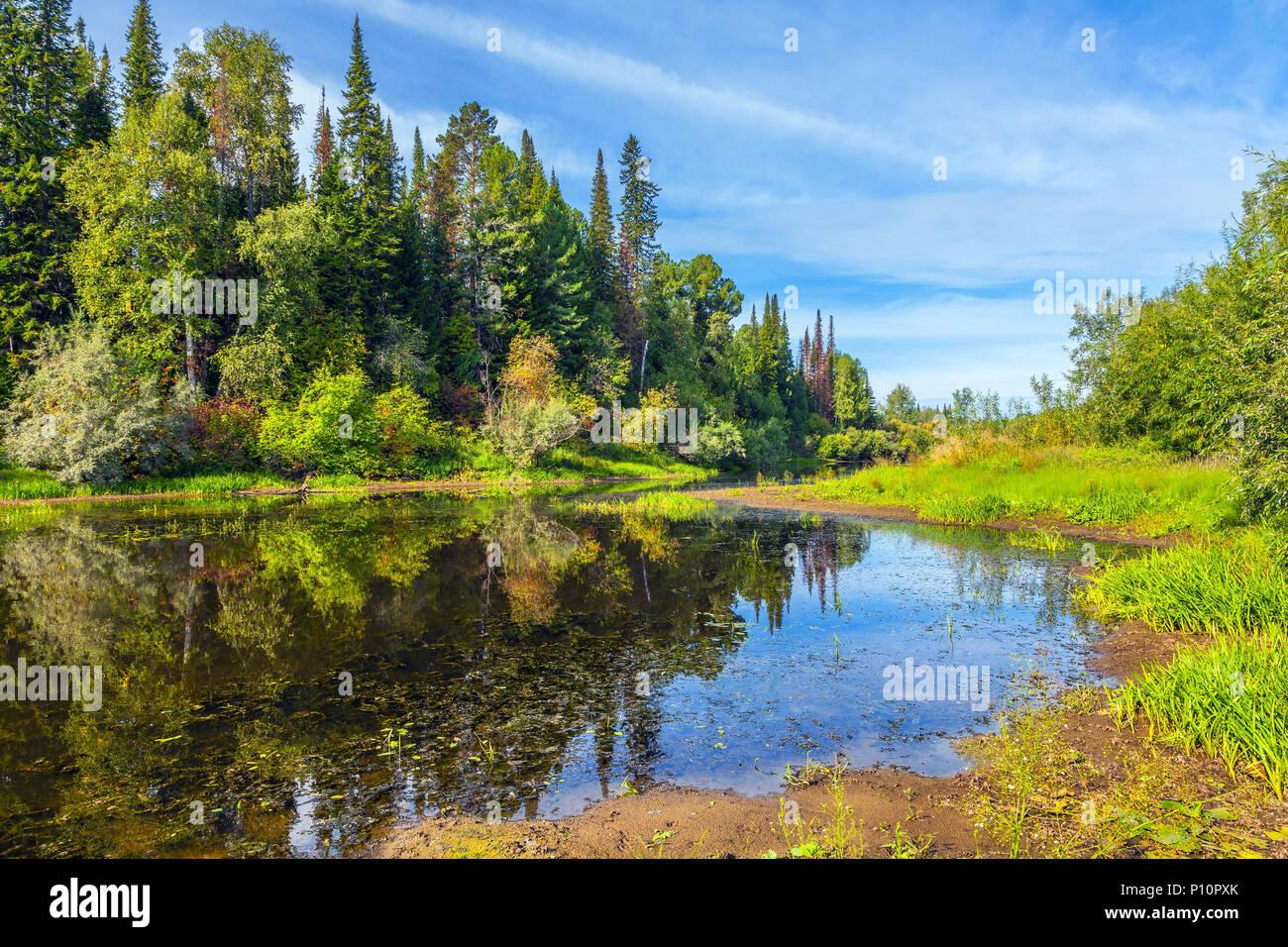 siberian taiga stock photo