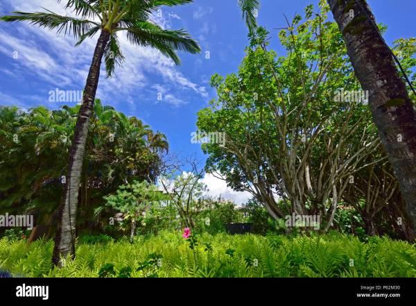 Hawaii Flower Waterfall Stock &
