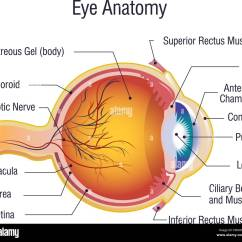 Diagram For Eye Surgery Cartoon 2002 Chevy Cavalier Exhaust System Human Stock Photos And