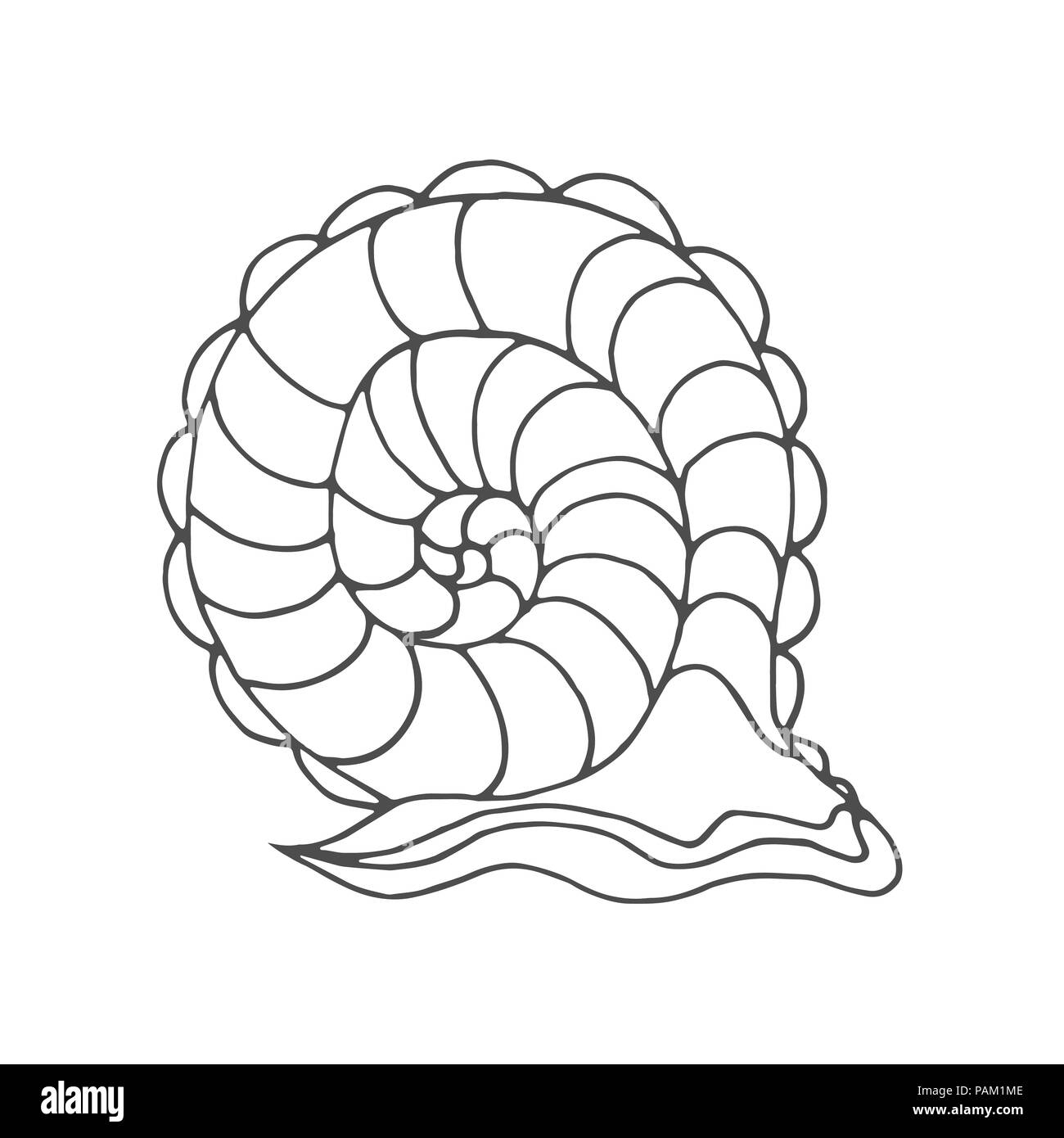 hight resolution of snail coloring page for children and adults pattern isolated cartoon character helix decorative element