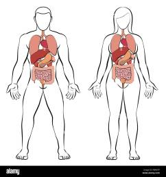 digestive tract with internal organs male and female body schematic human anatomy illustration on white background  [ 1299 x 1390 Pixel ]
