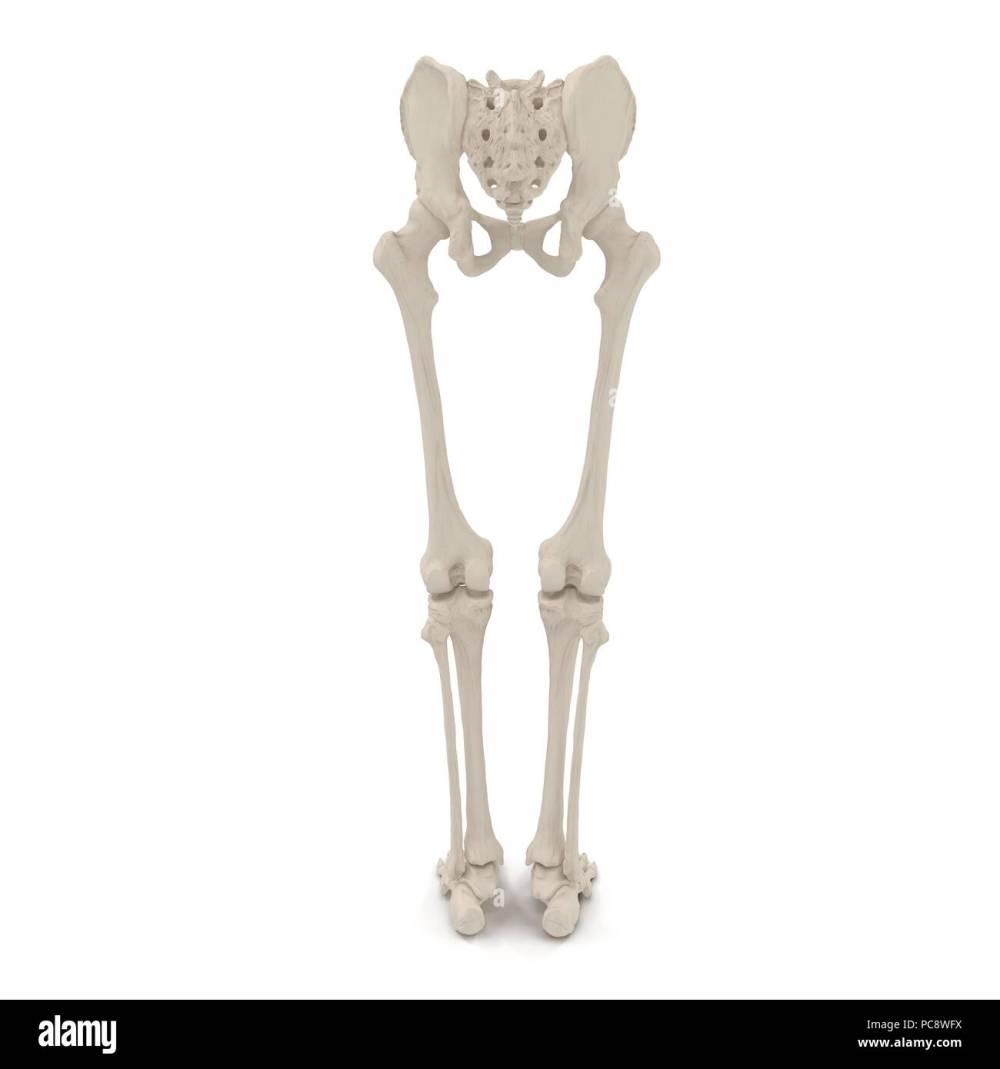 medium resolution of male lower body skeleton on white 3d illustration stock image