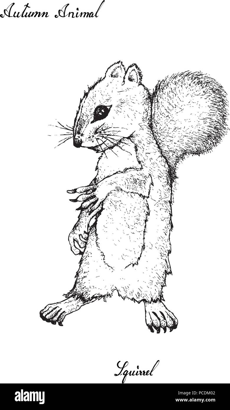 autumn animal illustration hand