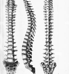 black and white print of the human spine from three angles 1 the front 2 the back and 3 the side with letters indicating individual vertebrae 1825  [ 887 x 1390 Pixel ]