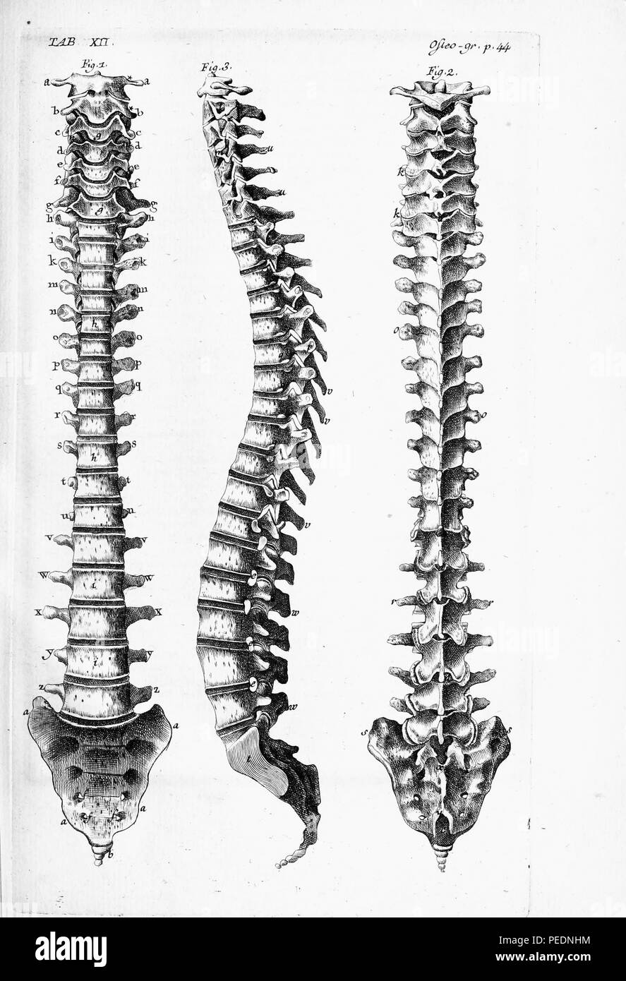 medium resolution of black and white print of the human spine from three angles 1 the front 2 the back and 3 the side with letters indicating individual vertebrae 1825