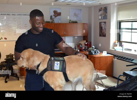 Prior to grooming the animal, New York City native Spc. Stephone ...