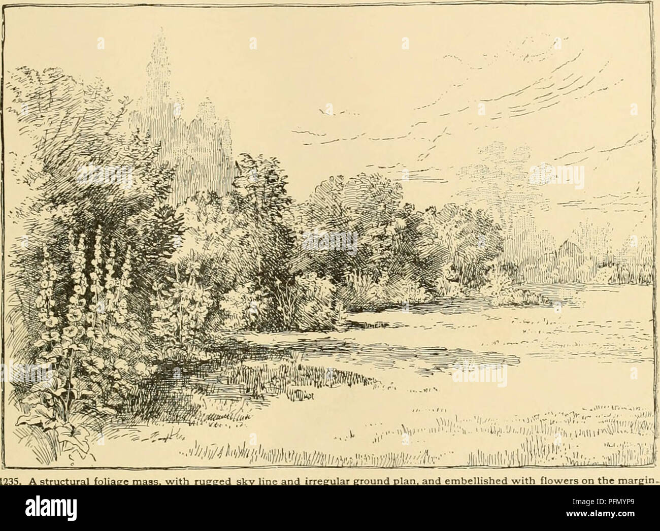 hight resolution of cyclopedia of american horticulture comprising suggestions for cultivation of horticultural plants descriptions of