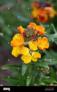 Persian Carpet Flower Stock Photos & Persian Carpet Flower