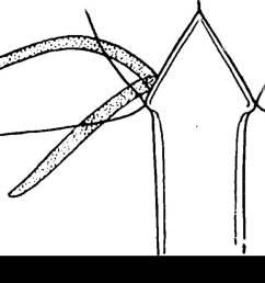 the eurypterida of new york eurypterida paleontology figure i8 diagram to indicate  [ 1300 x 925 Pixel ]