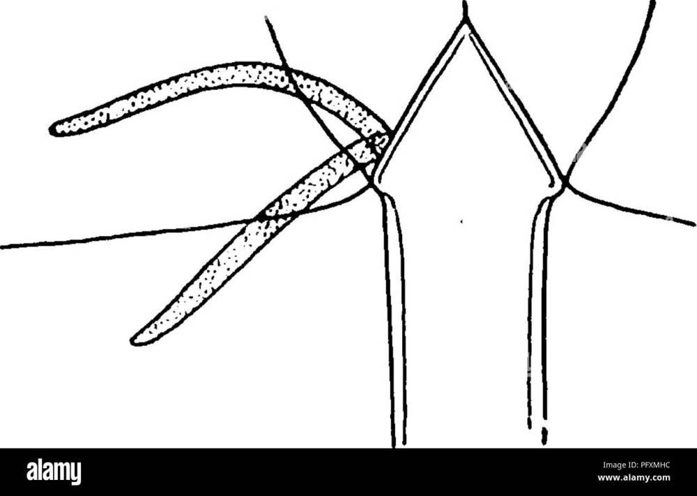 medium resolution of the eurypterida of new york eurypterida paleontology figure i8 diagram to indicate