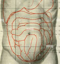 cunningham s text book of anatomy anatomy the abdominal cavity 1159 perpendicular planes each of these is subdivided into three parts a central and  [ 901 x 1390 Pixel ]