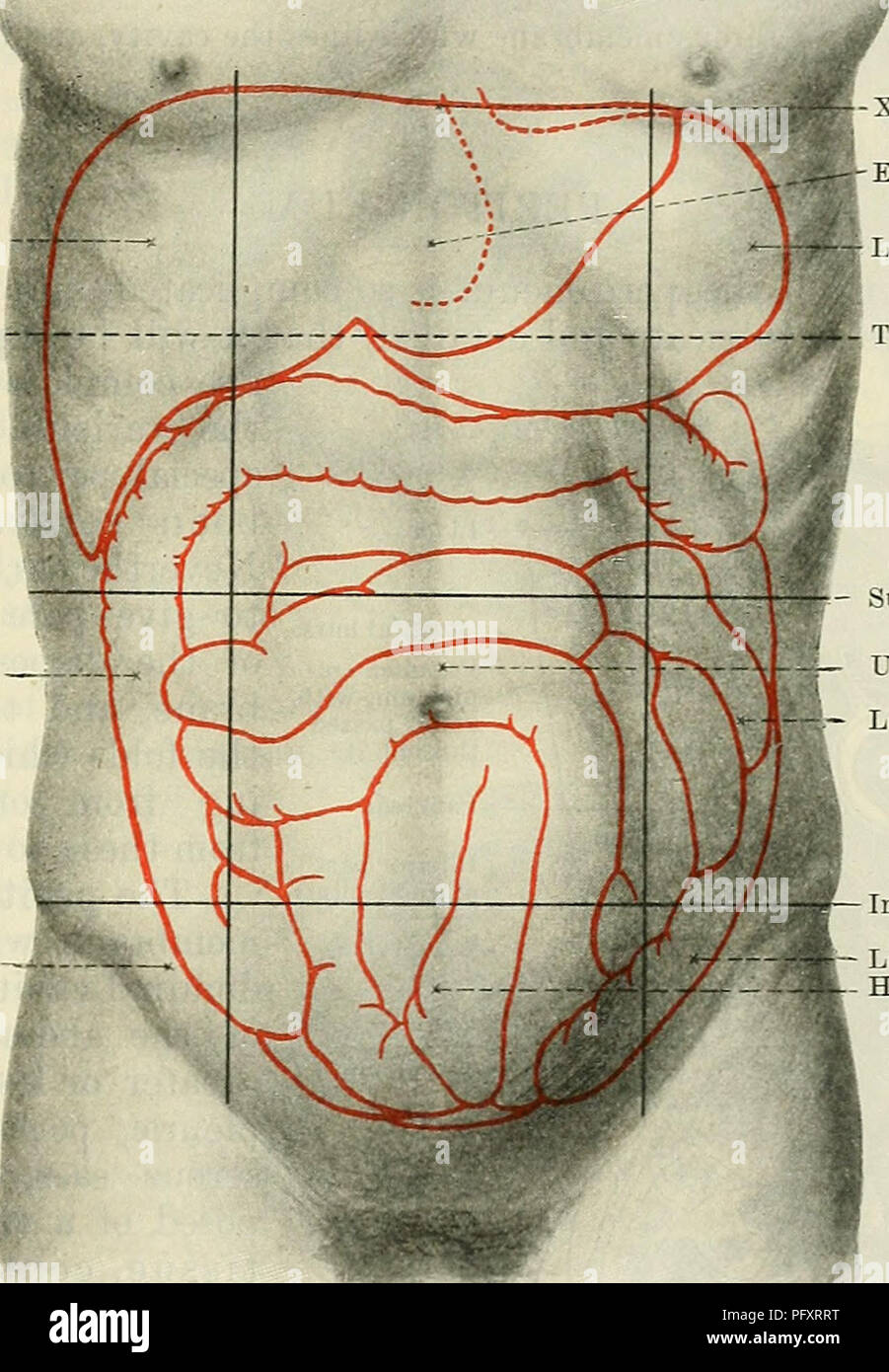 hight resolution of  cunningham s text book of anatomy anatomy the abdominal cavity 1159 perpendicular planes each of these is subdivided into three parts a central and