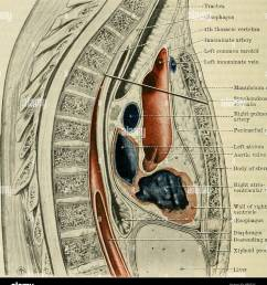 cunningham s text book of anatomy anatomy 1090 the kespiratoky system great  [ 1198 x 1390 Pixel ]