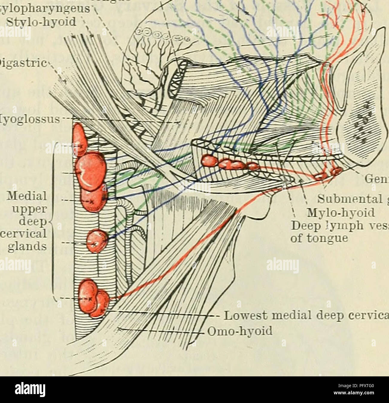 hight resolution of cunningham s text book of anatomy anatomy the lymph vessels of head and