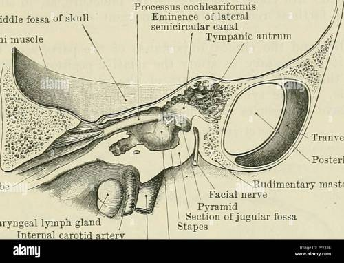 small resolution of  cunningham s text book of anatomy anatomy the ceanium 1367 chin may fracture the tympanic plate as well as the base of the skull