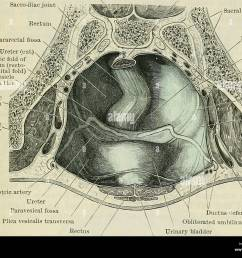 peritoneum 1237 cavity is somewhat complicated and is fully described in connexion with the several pelvic organs a general account will suffice here  [ 1300 x 1056 Pixel ]