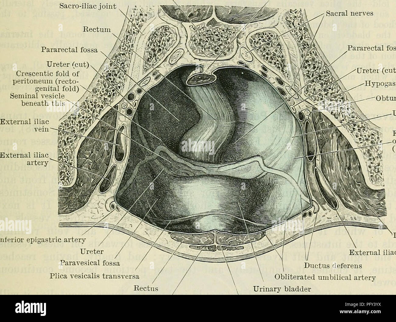 hight resolution of peritoneum 1237 cavity is somewhat complicated and is fully described in connexion with the several pelvic organs a general account will suffice here