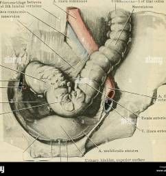 1222 the digestive system blends with the parietal peritoneum on the posterior abdominal wall and is completely lost as a rule  [ 1300 x 1119 Pixel ]