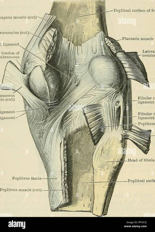 small resolution of cunningham s text book of anatomy anatomy 341 the articulations oe joints