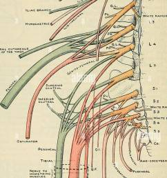 cunningham s text book of anatomy anatomy 736 the neevous system 1  [ 755 x 1390 Pixel ]