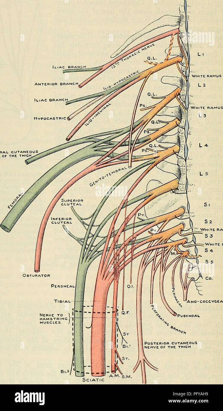 hight resolution of cunningham s text book of anatomy anatomy 736 the neevous system 1