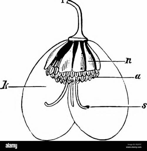 small resolution of  handbook of flower pollination based upon hermann mu ller s work the fertilisation of flowers by insects fertilization of plants