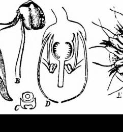 handbook of flower pollination based upon hermann mu ller s work the fertilisation of flowers by insects fertilization of plants  [ 1300 x 663 Pixel ]